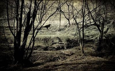 Photograph - Emergence by Susan Maxwell Schmidt