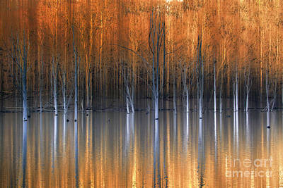 Of Fall Photograph - Emerging Beauties Reflected by Marco Crupi