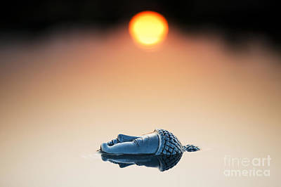 Sunrise Photograph - Emerging Buddha by Tim Gainey