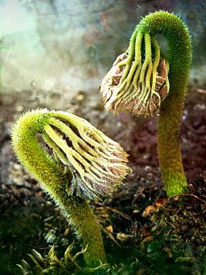 Emerging Sprouts Art Print by Shirley Sirois