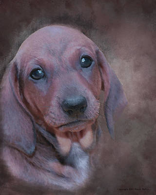 Dachshund Puppy Digital Art - Emily by Maryle Malloy