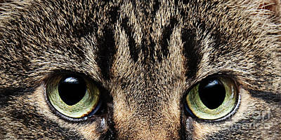 Andee Design Kitties Photograph - Emmy Eyes by Andee Design