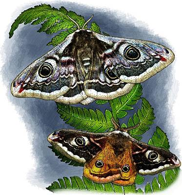 Photograph - Emperor Moths by Roger Hall