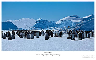 Emperor Penguin Rookery Art Print by David Barringhaus