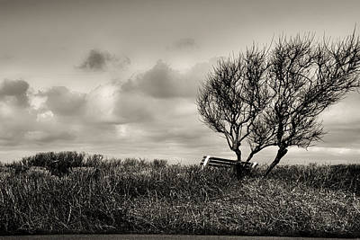 Winter Photograph - Empty Bench Naked Trees by Bob Orsillo