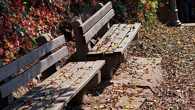 Photograph - Empty Benches In Autumn by Eva-Maria Di Bella