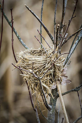 Photograph - Empty Nest by Bradley Clay