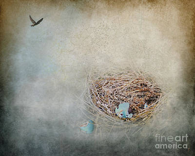 Photograph - Empty Nest by Jai Johnson