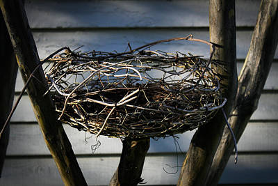Photograph - Empty Nest by Jeff Mize