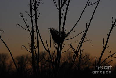 Photograph - Empty Nest by Mark McReynolds