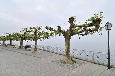 Photograph - Empty Promenade Meersburg Germany by Matthias Hauser