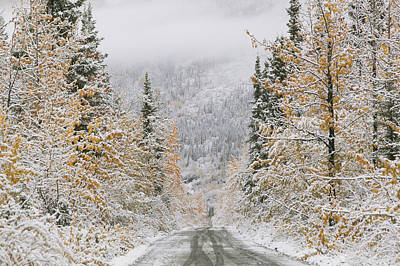 Snowed Trees Photograph - Empty Road Passing Through A Forest by Panoramic Images