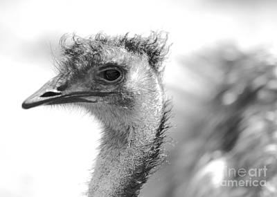 Emu - Black And White Art Print