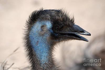 Emu Art Print by DejaVu Designs