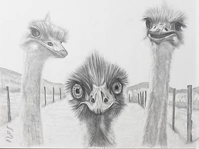Emu Drawing - Emu Gossip by Laura Dallas