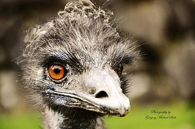 Emu Digital Art - Emu by Safe Haven Photography Northwest