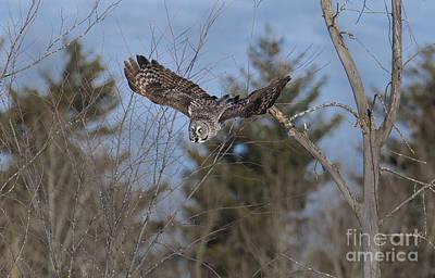 Ggo Photograph - En Vol - In Flight by Nicole  Cloutier Photographie Evolution Photography