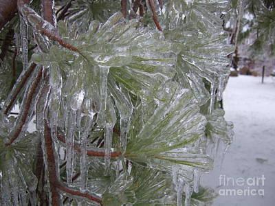 Encased In Ice Art Print by Deborah DeLaBarre