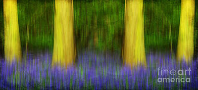 Photograph - Enchanted Bluebell Woods by Lisa Cockrell