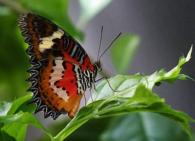Photograph - Enchanted Butterfly by Bruce Bley
