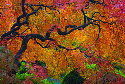 Enchanted Canopy Art Print by Patricia Babbitt