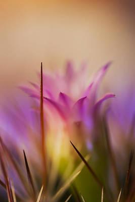 Photograph - Enchanted by Charles Dana