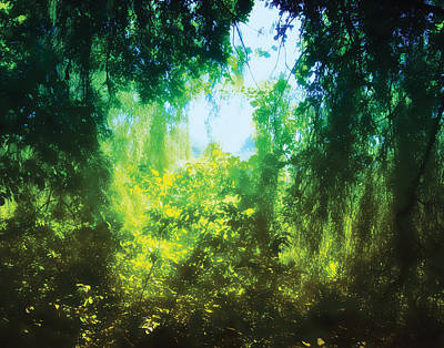 Photograph - Enchanted Forest 12 by The Art of Marsha Charlebois