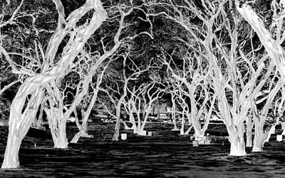 Photograph - Enchanted Forest by AJ  Schibig
