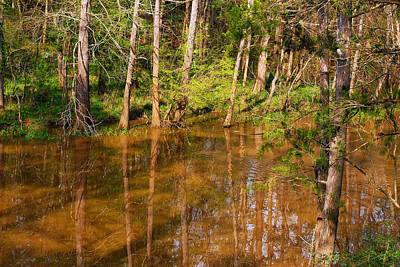 Photograph - Bayou Reflections 2 by Connie Fox