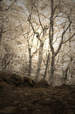 Photograph - Enchanted Forest by David Troxel
