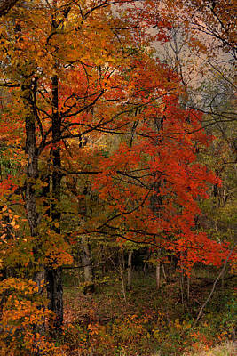 Photograph - Enchanted Forest by Deena Stoddard