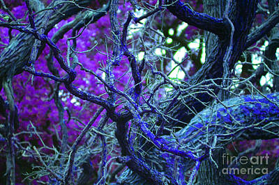 Photograph - Enchanted Forest by First Star Art