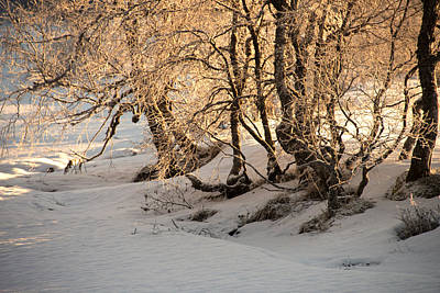 Sun Photograph - Enchanted Forest  by Gry Thunes