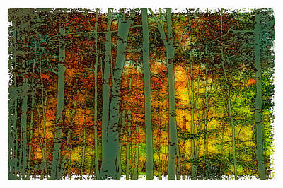 Corporate Art Photograph - Enchanted Forest In Autumn by David Patterson
