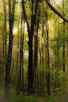 Wall Art - Photograph - Enchanted Forest by James Chesnick