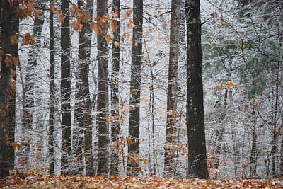 Photograph - Enchanted Forest by Linda Segerson