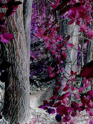 Fantasy Bark Photograph - Enchanted Forest by Martin Howard