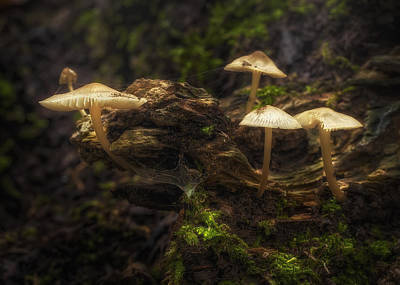 Toadstool Photograph - Enchanted Forest by Scott Norris