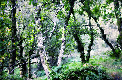 Enchanted Forest. The Kingdom Of Thetrees. Glendalough. Ireland Art Print by Jenny Rainbow