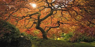 Photograph - Enchanted Garden by Hawaii  Fine Art Photography