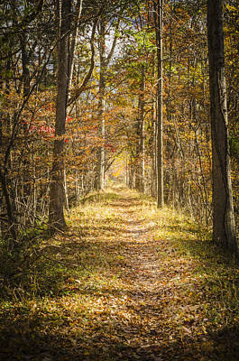 Photograph - Enchanted Path by Bradley Clay