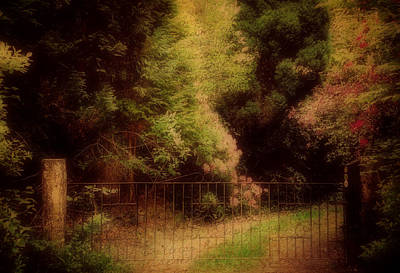 Photograph - Enchanted Path by Marilyn Wilson