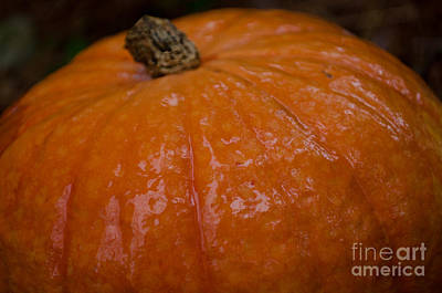 Photograph - Enchanted Pumpkin by Dale Powell