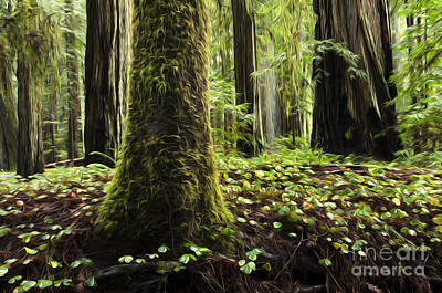 Photograph - Enchanted Spaces Forests 3 by Bob Christopher