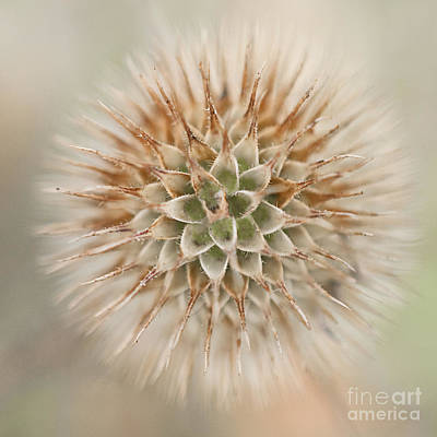 Enchanted Thistle Art Print by Terry Rowe