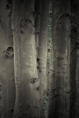 Grey Photograph - Enchanted Trees by The Art Of Marilyn Ridoutt-Greene