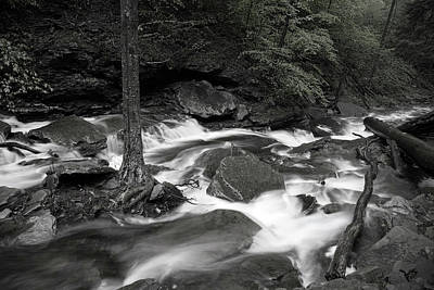 Photograph - Enchanted Wilderness Stream by John Stephens
