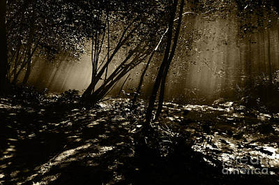 Photograph - Enchanted Wood by Simona Ghidini