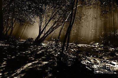 Photograph - Enchanted Wood by Simona Ghidini
