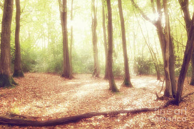 Restful Digital Art - Enchanted Woodlands by Natalie Kinnear
